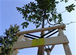 The company FCC Znojmo has adopted a tree